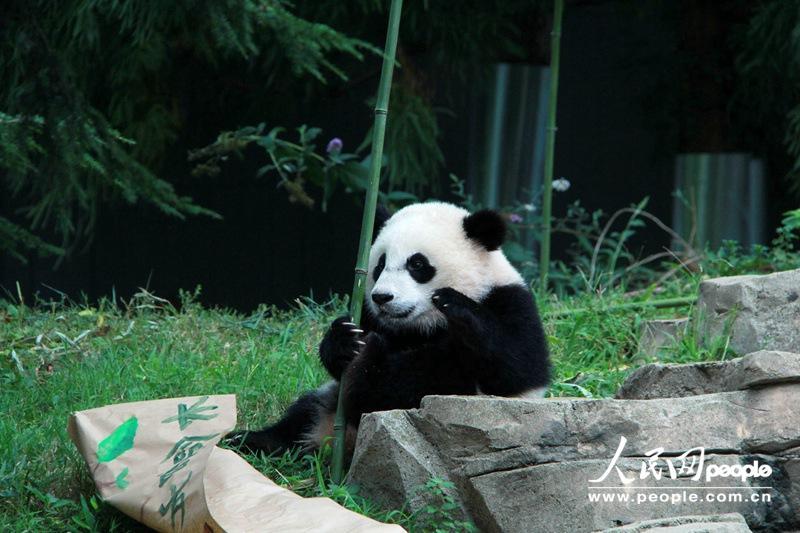 熊猫动物园logo