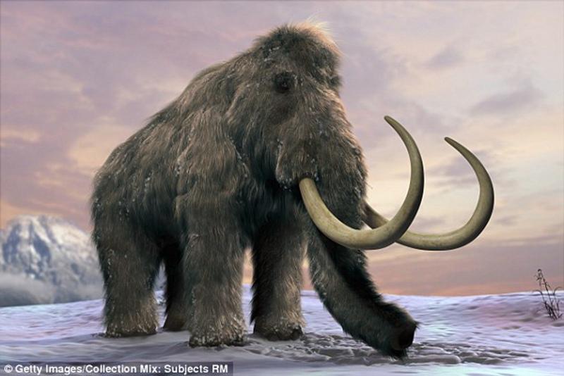 研究进一步证实食物链变化导致巨型动物灭绝